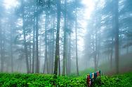 Foggy Forest with Colourful Clothesline, Shimla, India