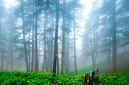 Foggy Forest with Colourful Clothesline, Shimla, India