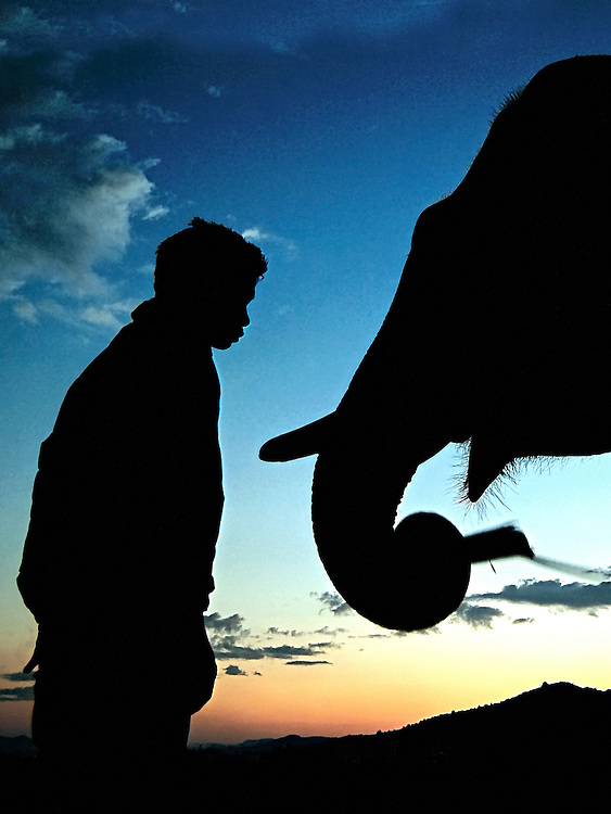 A mahout giving his elephant a treat of sugar cane at dawn ready for another days work in Hongsa District, Sainyabuli Province, Laos.