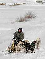 Barton Glasser / Daily Press.at third stage of the Mancos Mush / Silverton Slush dogsled race in Silverton last Sunday.