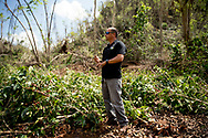 Vega Baja, PUERTO RICO - OCTOBER 11, 2017 -  Agronomist Jorge Luis Diaz Cruet surveys the damage to the Coffee Roasters&rsquo; plantation in Vega Baja, Puerto Rico, where the center of Hurricane Maria cause some of the most extensive damage .(Photo/Jos&eacute; Jim&eacute;nez) Through the Iris of Hurricane Mar&iacute;a<br />