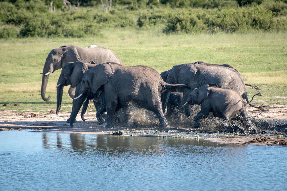 A family of elephants trudge through the water of Hwange National Park. Hwange, Zimbabwe.