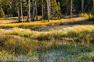 Frosty meadow and sunlight filtering through the trees, Yellowstone National Park, Wyoming/Montana.