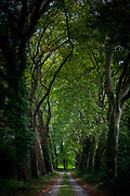 Sinister dark gloomy avenue of tall plane trees and looming canopy of branches on road to nowhere, France