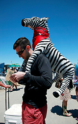 05 May 2013. New Orleans, Louisiana,  USA. .New Orleans Jazz and Heritage Festival. JazzFest..A man with a zebra on his back gets an ice cold beer..Photo; Charlie Varley.