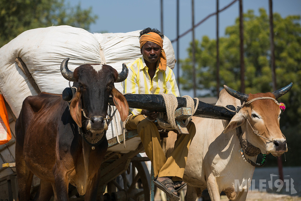 A farmer arriving at the cotton ginners in Madhya Pradesh, India.