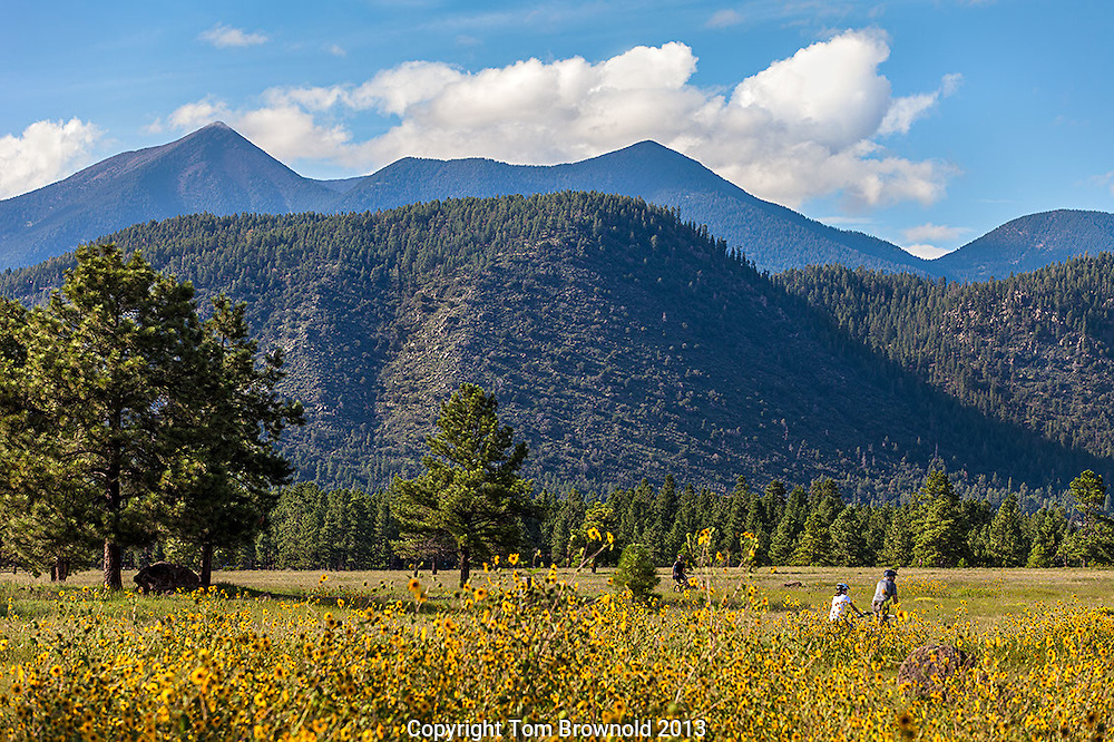 Buffalo park in Flagstaff, Arizona and the San Francisco Peaks