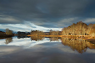 Alders along River Spey, Cairngorms National Park, Scotland, UK