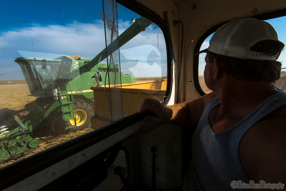 Larry Hansen rice harvest at Highway 99 and 16 in Oroville CA Wednesday, September 13, 2017.<br /> Photo Brian Baer