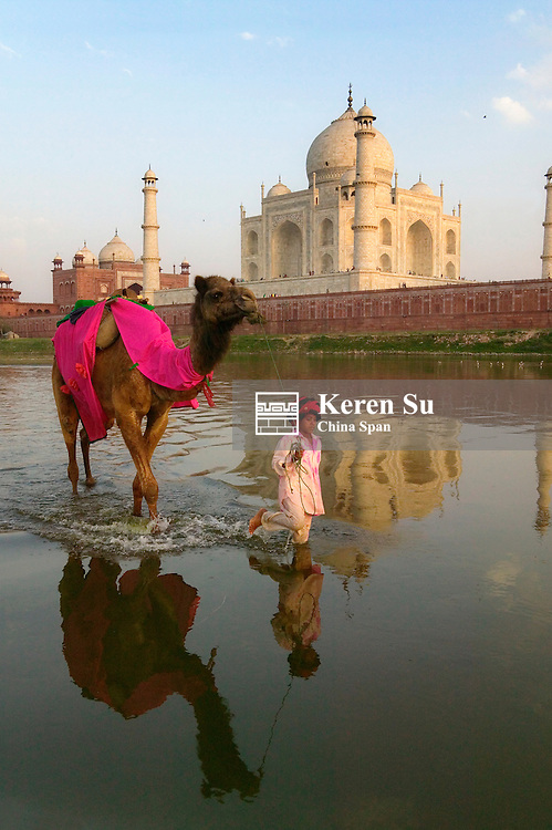 Child with camel in the moat with Taj Mahal at sunset, Agra, India