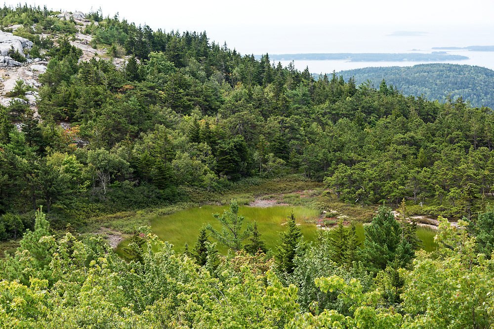 The Featherbed, an alpine bog near the South Ridge trail, Cadillac Mountain, Acadia National Park, Maine.