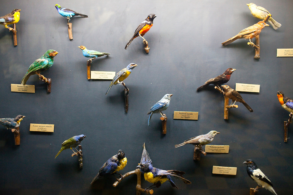 Bird specimens are on display at the Natural History Museum on Saturday, Apr. 4, 2009 in Lima, Peru.