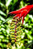 Flor de bromélia no Caminho da Gurita, no Parque Municipal da Lagoa do Peri. Florianópolis, Santa Catarina, Brasil. / Bromeliad flower at Gurita trekking trail, in Lagoa do Peri Municipal Park. Florianopolis, Santa Catarina, Brazil.