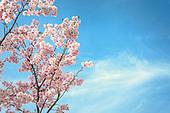 Flowers vs Sky