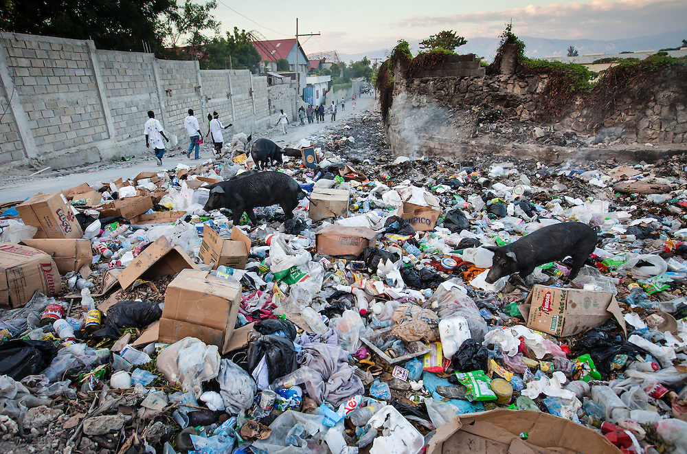 Pigs rummage through garbage on a street in Port-au-Prince. Haiti where a lack of sanitation has led to the spread of cholera. Haiti's lack of sanitation and clean water makes it easy for cholera to spread.