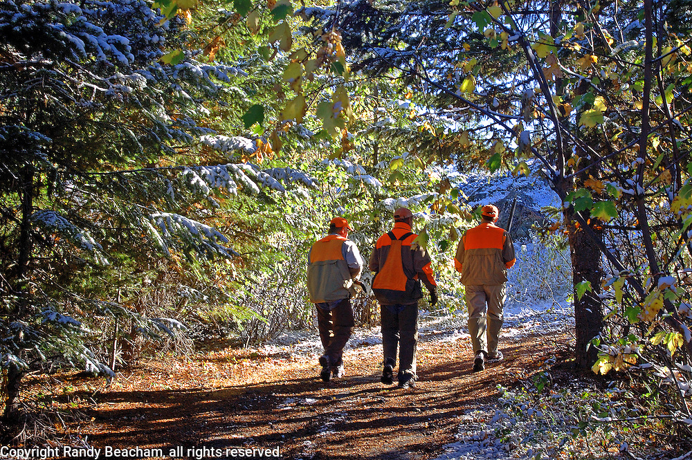 Hunting grouse in fall with Linehan Outfitting. Yaak Valley in the Purcell Mountains, northwest Montana.