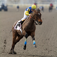 Thoroughbred Racing Woodbine 2010