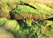 Algae covered river rock. Chattahoochee River, Georgia.