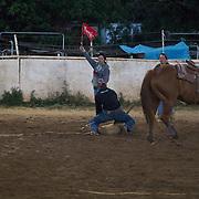Fri Goat Tying