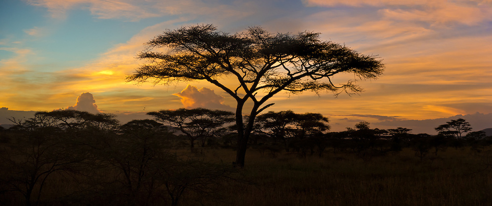 Sunset in Serengeti - panorama