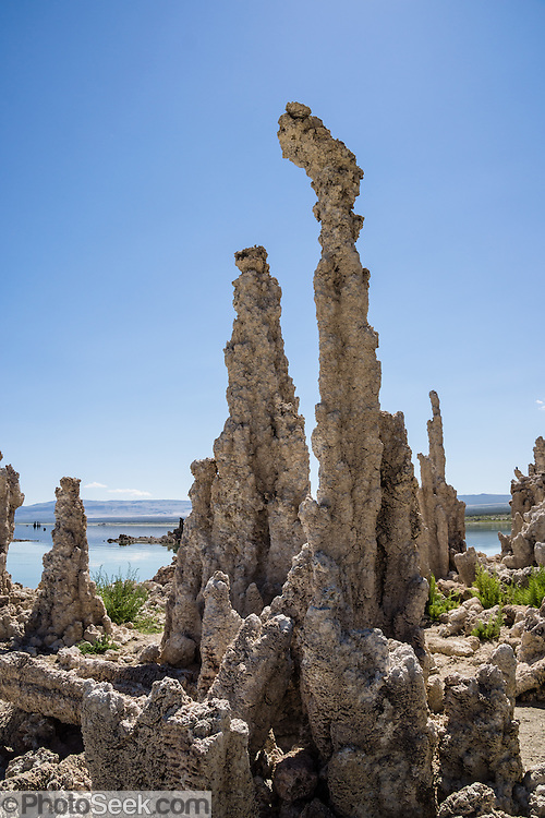 Intriguing towers of calcium-carbonate decorate the South Tufa Area, Mono Lake Tufa State Natural Reserve, Lee Vining, California, USA. The Reserve protects wetlands that support millions of birds, and preserves Mono Lake's distinctive tufa towers -- calcium-carbonate spires and knobs formed by interaction of freshwater springs and alkaline lake water. Mono Lake has no outlet and is one of the oldest lakes in North America. Over the past million years, salts and minerals have washed into the lake from Eastern Sierra streams and evaporation has made the water 2.5 times saltier than the ocean. This desert lake has an unusually productive ecosystem based on brine shrimp, and provides critical nesting habitat for two million annual migratory birds that feed on the shrimp and blackflies. Since 1941, diversion of lake water tributary streams by the city of Los Angeles lowered the lake level, which imperiled the migratory birds. In response, the Mono Lake Committee won a legal battle that forced Los Angeles to partially restore the lake level.