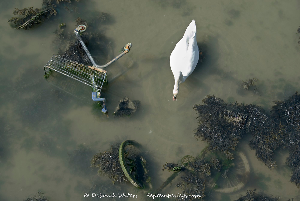 Portsmouth, UK 02 April 2013: a swan swims amongst rubbish dumped in Portsmouth Harbour