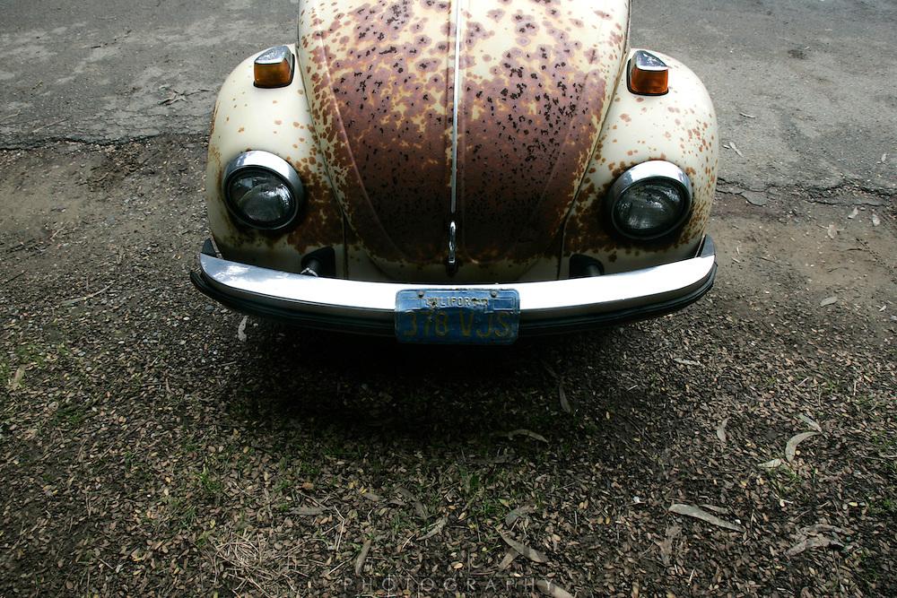 Bug. Polo Fields 3:20pmphoto by Jason Doiy