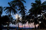 Coconut pal silhouette, Om Brum Island, Triton Bay, Papua