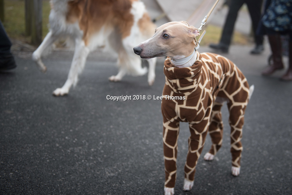 NEC, BIRMINGHAM, ENGLAND, UK. 9th MARCH 2018. Pictured:  A smartly dressed dog wears a giraffe inspired body coat. / Hundreds of dogs and their proud owners arrive at the NEC on a cold and misty morning. First held in 1891, Crufts is said to be the largest show of its kind in the world, the annual four-day event, features thousands of dogs, with competitors travelling from countries across the globe to take part and vie for the coveted title of 'Best in Show'.  // Lee Thomas, Tel. 07784142973. Email: leepthomas@gmail.com  www.leept.co.uk (0000635435)