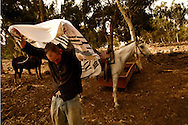 Yair Negev 24 prying the morning prays after patrolling the cow flock of Moshav Yehonatan in the Golan height, Israel. Sunday October, 07, 2007