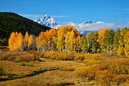 Fall Colors at Oxbow Bend in Grand Teton National Park.<br />