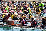 新华社照片,洛杉矶,2017年7月31日<br />     (国际)(11)第二十一届加州长滩龙舟节<br />     7月30日,参赛选手奋力划桨。<br />     在美国洛杉矶长滩市海滨体育场举行的第二十一届年度长滩龙舟节,吸引百余队上千选手参赛。长滩龙舟节是加州最大的龙舟比赛,同时也展示了中国古代龙舟赛的运动。<br />     新华社发(赵汉荣摄)<br /> Dragon Boat racers compete during a 500-meter race at the 21st Annual Long Beach Dragon Boat Festival at Marine Stadium in Long Beach, California, the United States, on July 30, 2017. The Long Beach Dragon Boat Festival is held every year in July at Marine Stadium to hosting the largest dragon boat competitions in California. It showcases the ancient Chinese sport of dragon boat racing. (Xinhua/Zhao Hanrong)(Photo by Ringo Chiu)<br /> <br /> Usage Notes: This content is intended for editorial use only. For other uses, additional clearances may be required.