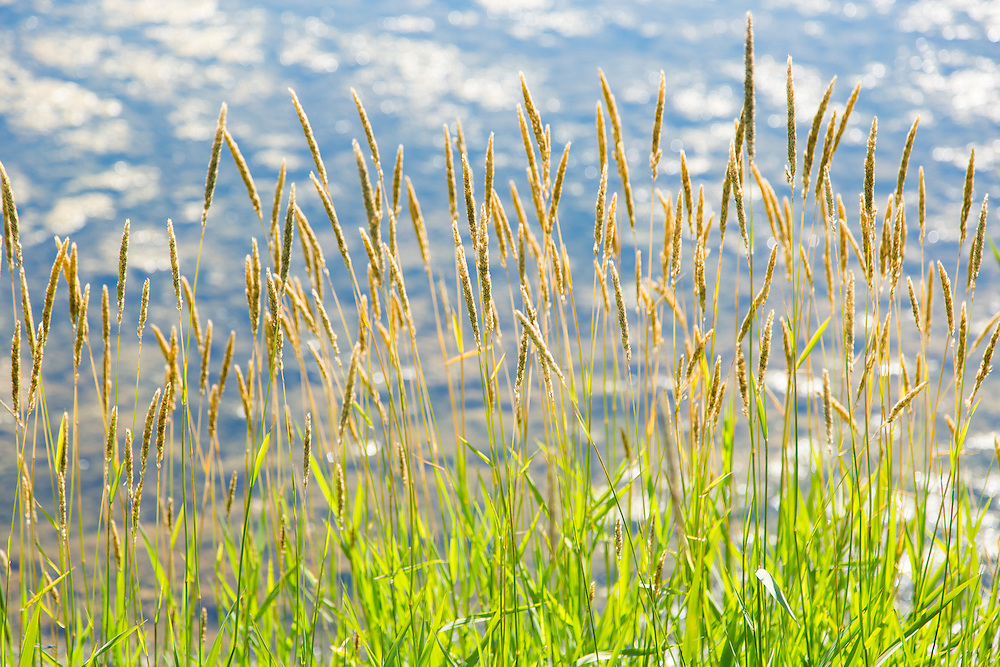 Grasses, Rest Stop, Summer Day, Landis