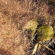 Saguaro National Park - Tucson