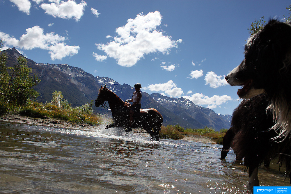 Horses and dogs cool off in a watering hole during the 50th Anniversary Glenorchy Race meeting. The races, which originally started in the 1920's, were resurrected in 1962 and have been run by local farmers and the rugby club on the first Saturday after New Years Day ever since. Glenorchy, Otago, New Zealand. 7th January 2012