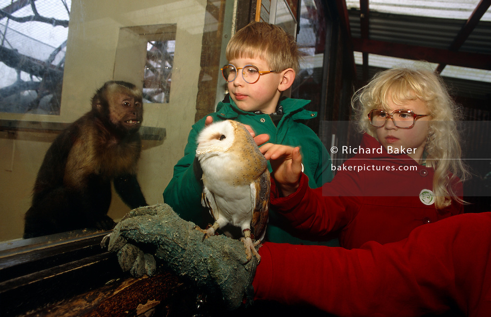 As a small monkey looks on through the thick glass of its enclosure, we see two unsighted children reaching out to feel the soft feathers of a Barn Owl. As part of their learning experience as blind (or near-blind) children as well as the extra therapy of heightening their touch sensensation..The Barn Owl (Tyto alba) is the most widely distributed species of owl, and one of the most widespread of all birds. It is also referred to as Common Barn Owl, to distinguish it from other species in the barn-owl family Tytonidae. These form one of two main lineages of living owls, the other being the typical owls (Strigidae). Drusillas Park is a small zoo near to Alfriston, in East Sussex targetting children aged between about 2 to 10. The zoo is home to many exotic wild and domestic animals with hands-on activities such as this.