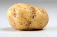 Studio shot of potato - close up