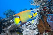 Caribbean Sea Underwater - Yucatan - Mexico