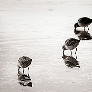 Birds in a retention pond - Riparian Preserve, Gilbert, AZ