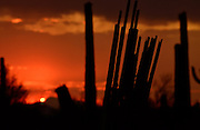 Ironwood Forest National Monument at sunset in the Sonoran Desert near Eloy, Arizona, US.