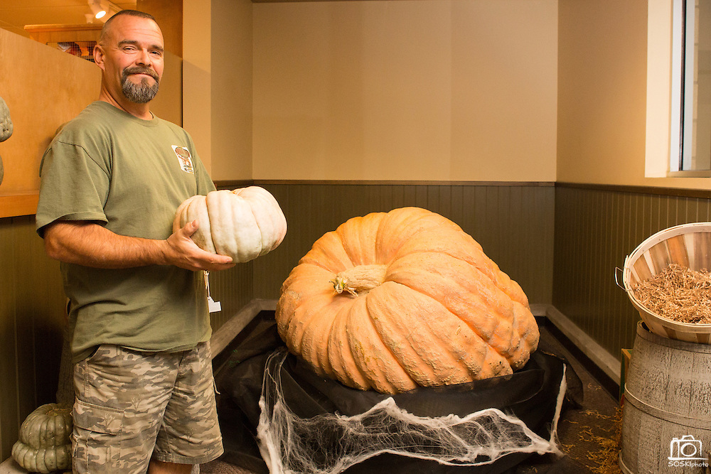 Don Davis poses for a portrait with his 931 pound competition pumpkin at Safeway in Milpitas, Calif., on Oct. 21, 2012.  Davis spends countless hours year round, caring for his competition pumpkins, which can grow 20-50 pounds per day.  Davis recently placed 10th of 66 entries in the Elk Grove Pumpkin Festival with a pumpkin weight of 1,121 pounds.  Photo by Stan Olszewski/SOSKIphoto.