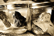 Vendors display preserved snakeheads for sale at the 48th annual Worlds Largest Rattlesnake Round-up at the Nolan County Coliseum in Sweetwater, Texas, on Saturday, March 11, 2006. The vendors purchase the snakeheads from the Sweetwater Jaycees each year and seal them in mason jars to sell at the next years round up.  The Rattlesnake Round-up has been a local festival in Sweetwater for the past 50 years.