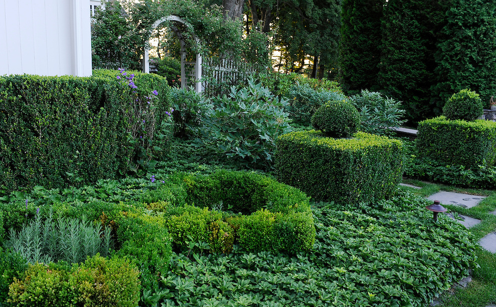 TOPIARY BOXWOOD AND PATH