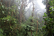 Cloud forest, Wayqecha Cloud Forest Biological Reserve, Andes, Peru