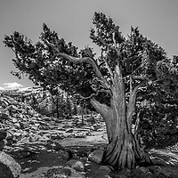 Yosemite National Parks black and white