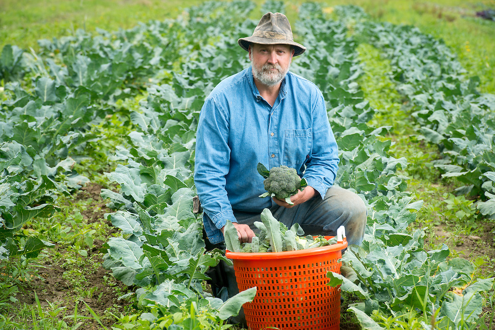 Farmer posed in a broccoli field