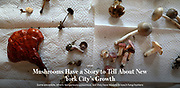 Please click to view: https://www.wsj.com/articles/mushrooms-have-a-story-to-tell-about-new-york-citys-growth-1501502400