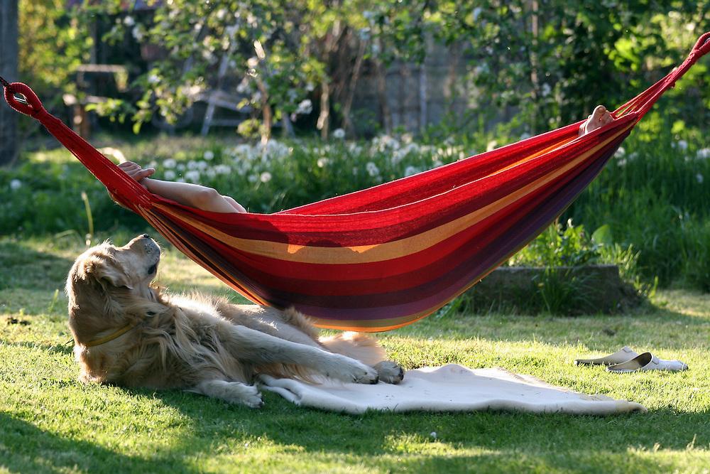 Golden Retriever Lemmy im Garten unter einer H&auml;ngematte in welcher eine Frau liegt. Der Golden Retriever ist ein intelligenter, freudig arbeitender Hund, dem auch extreme, nasskalte Witterungsbedingungen nichts ausmachen. Dem steht allerdings eine relativ starke Empfindlichkeit hinsichtlich hoher Temperaturen gegen&uuml;ber. Grunds&auml;tzlich ist die Rasse ruhig, geduldig, aufmerksam und niemals aggressiv.<br /> <br /> Golden Retriever Lemmy under a hammock with a woman in the garden.