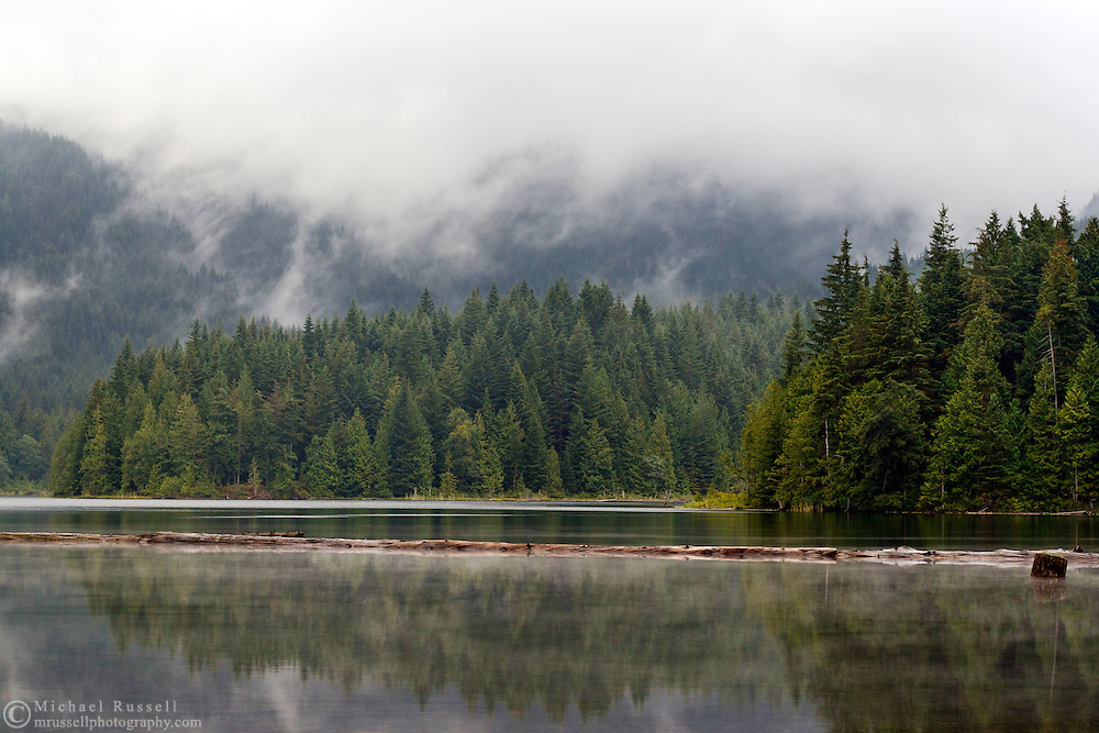 Logs on the surface of Weaver Lake in the Fraser Valley of British Columbia, Canada