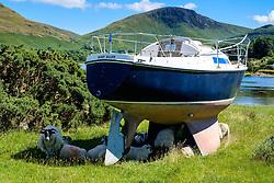 Sheep sheltering from the summer heat under a yacht at Lochranza, Isle of Arran, Scotland<br /> <br /> (c) Andrew Wilson | Edinburgh Elite media